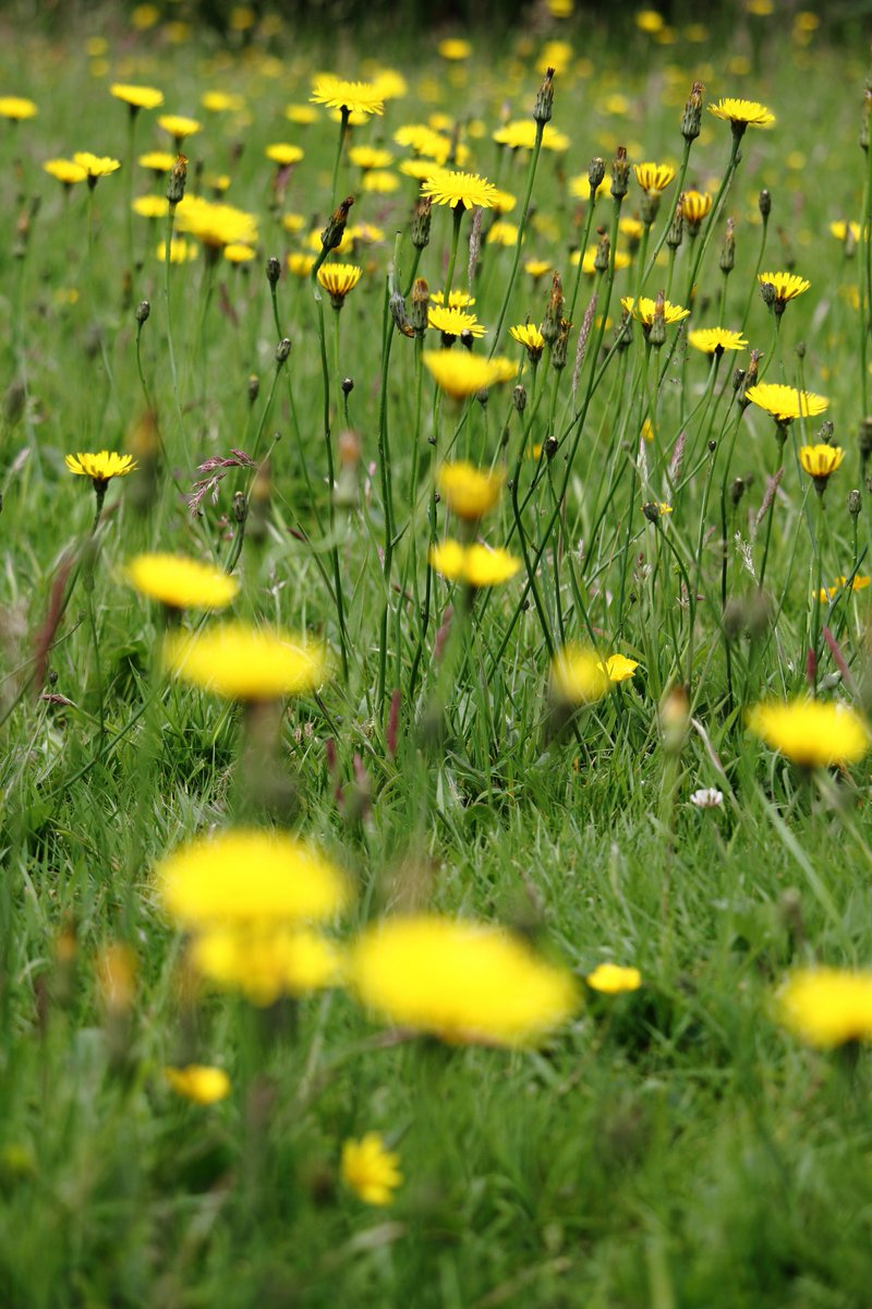 @Lancswildlife We let our back lawn turn into a meadow this year, the bees & other insects loved it!