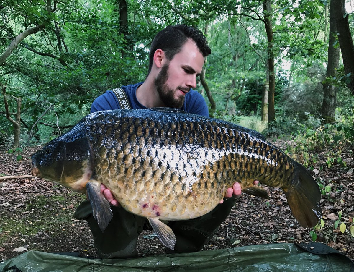 A brute of a common for Alex on the Ski Pit today. Well done on the pb sir! #taverhammill #carpfishi