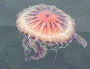 test Twitter Media - Recomanacions que cal tenir en compte amb les picades de meduses.  https://t.co/oIULtwkkr7 https://t.co/inNXDlttGh