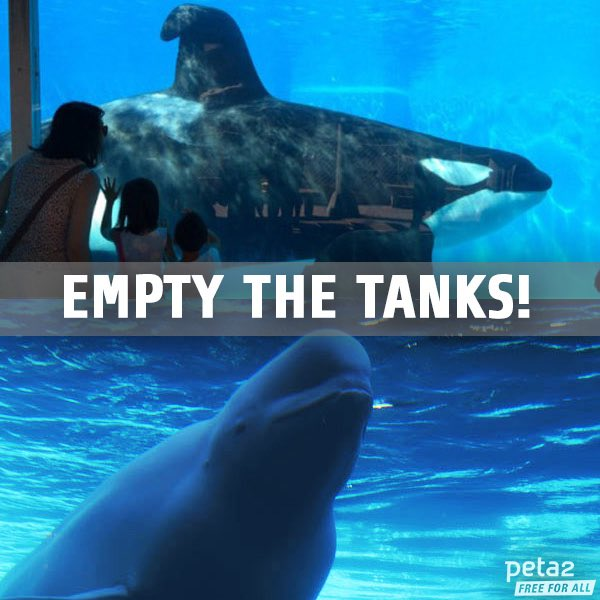 Empty the tanks! #SeaWorld https://t.co/DJrDNXZTzA