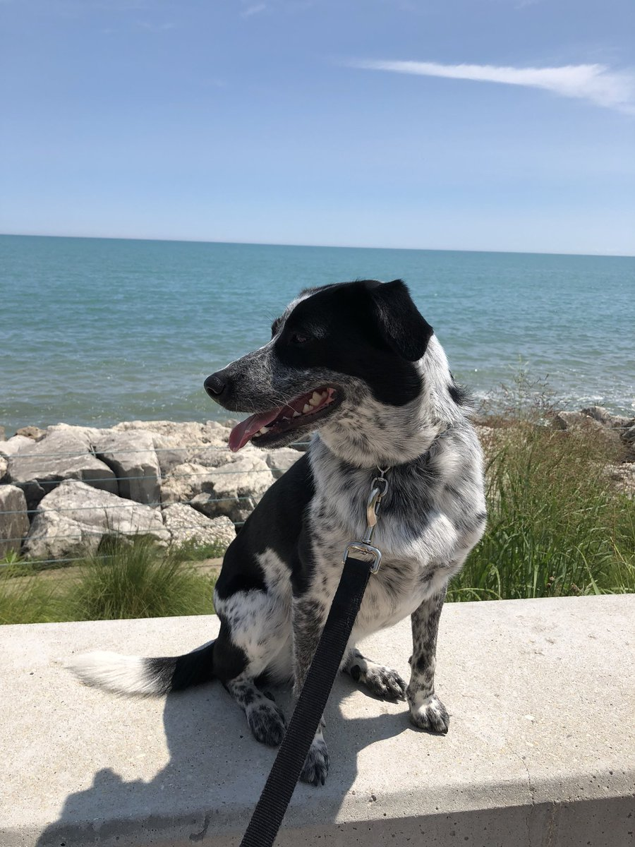 RT @sitwithsantos: It's cooler by the lake #heatwave #therapydog #loyolachicago https://t.co/7XCNli0tyB