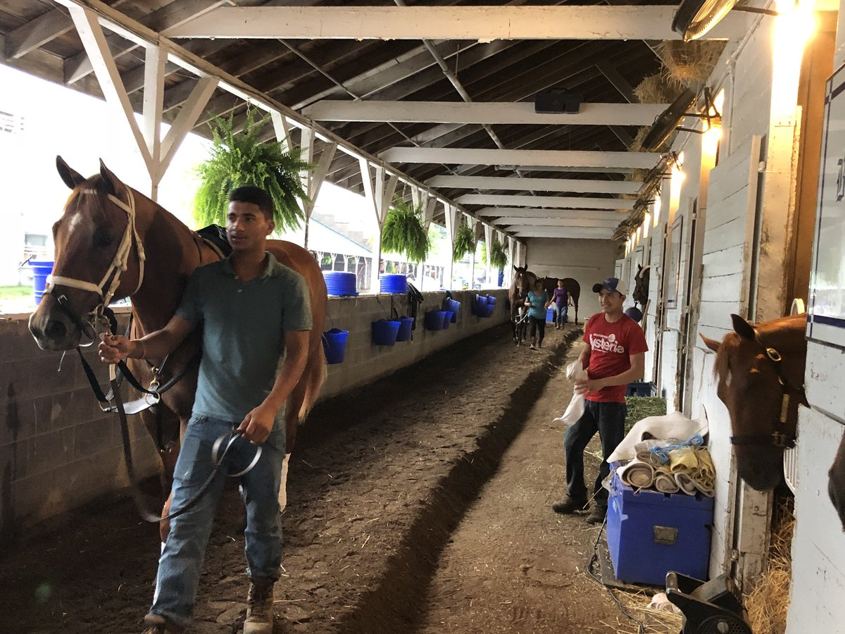 test Twitter Media - Monomoy Girl (right in stall) post nice 5/8ths work this AM seems very uninterested in her full brother as he heads to the track for his first morning @ChurchillDowns for @bradcoxracing https://t.co/qkLZ5LCjf1