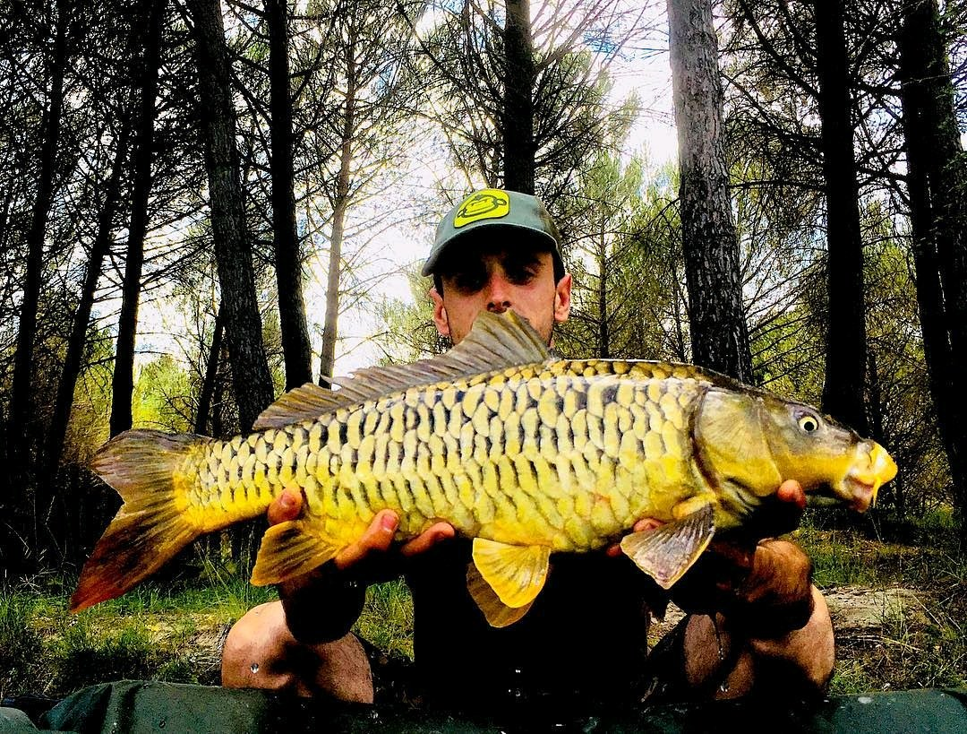 Wow look at this scaley warrior <b>😍</b> #fishing #angling #badangling #carpfishing https://t.co/