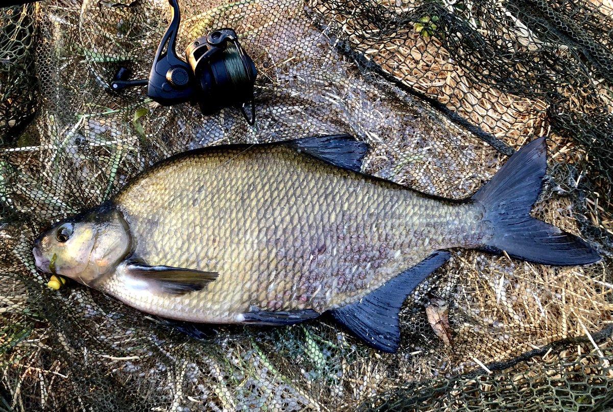 Was back on the hunt for river carp this <b>Morning</b>. This ain't a river carp 😫 #carp #carpf