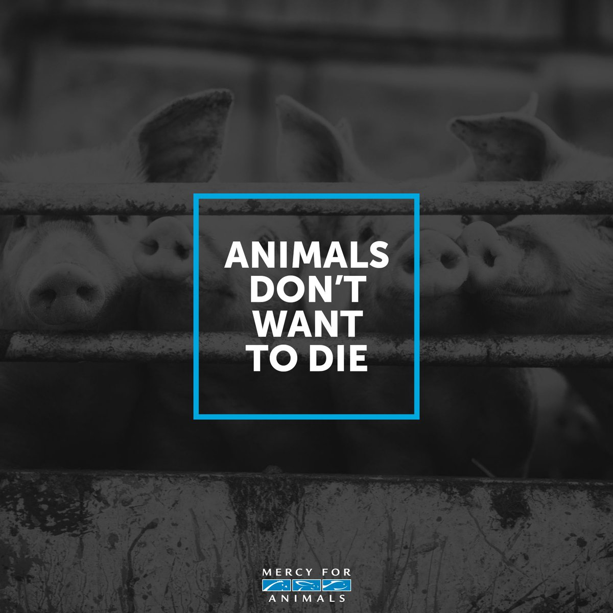 RT @MercyForAnimals: Wake up. https://t.co/XAcNjiQK2O