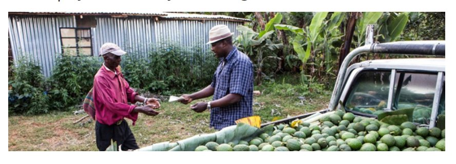 test Twitter Media - #Findingoftheweek on avocado farming in Kenya: 'Farmers who receive avocado training benefit from improved production techniques resulting in increased sales of high quality avocados' Read more on training and contract farming for productive employment: https://t.co/xSePyZUcDz https://t.co/LwEh0EEhRi