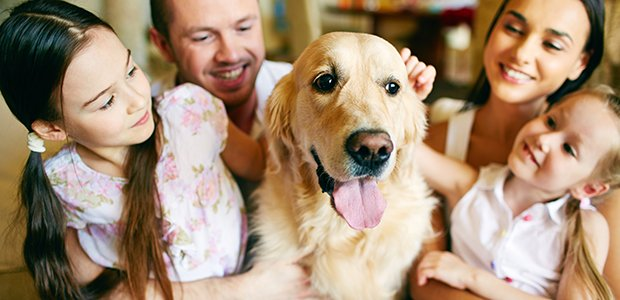 SPONSORED: Pet survey highlights the role of animals in families  https://t.co/AarInvwSc6 https://t.co/TpoC5SZ7a5