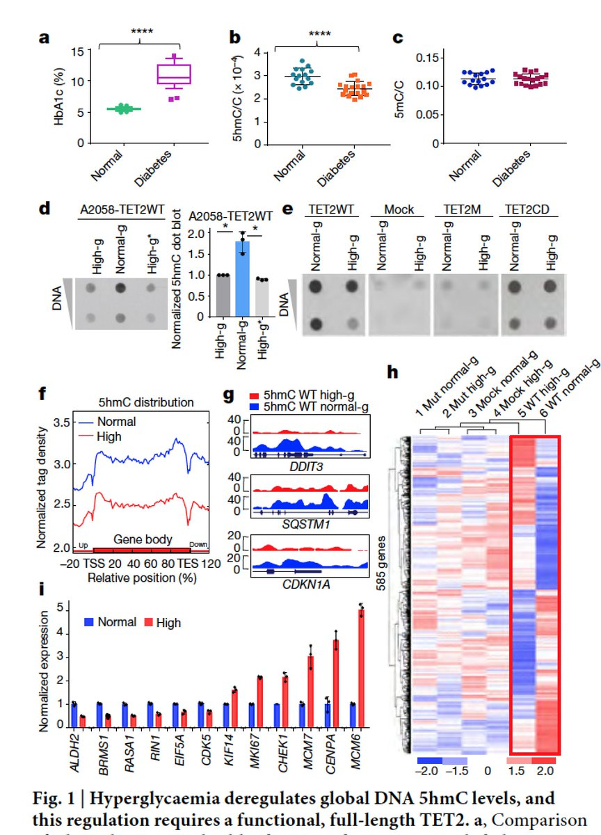 test Twitter Media - The link between #diabetes and #cancer: the epidemiology is backed up by high glucose liability, epigenomic (methylome) mechanism, and metformin protective effect https://t.co/BfzpLava2H @nature https://t.co/yWd8c10heT