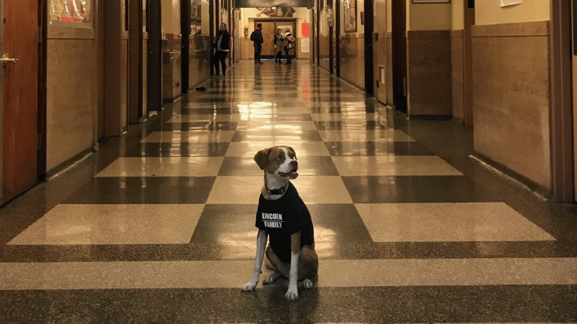 test Twitter Media - Making Comfort Dogs an Everyday Part of School https://t.co/UEjvktypIW #SEL #SEL4CA #SocialEmotional #kids #security #protection #love #skills #community #school #thrive #social #behavior #emotionalintelligence #shool #bullyinghurts #learntoteach #empathy https://t.co/oUe4C0tMBr