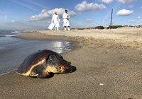 test Twitter Media - La #plastica rappresenta più dell'80% dei #rifiuti ritrovati in #mare e sulle spiagge. Il progetto europeo INDICIT utilizza le #tartarughe marine Caretta Caretta come indicatori dell'impatto della plastica su animali del #Mediterraneo. Per saperne di più https://t.co/VUJcpAU1aI https://t.co/FRGA1j9z75