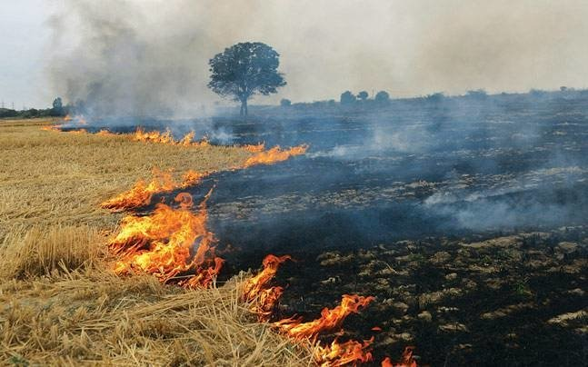 test Twitter Media - As an #alternative to #crop burning, a team of #scientists from the Bioenergy group at Agharkar Research Institute (#ARI), #Pune have come up with a cost-effective way to dispose off #agricultural #residues. https://t.co/NAgKGKrYxI