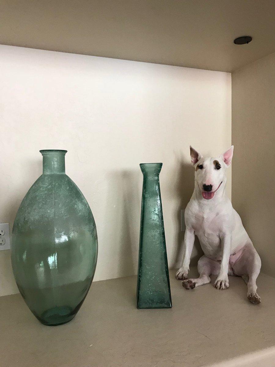 Happy to be a glass vase. 😄 DgIrCP9taA