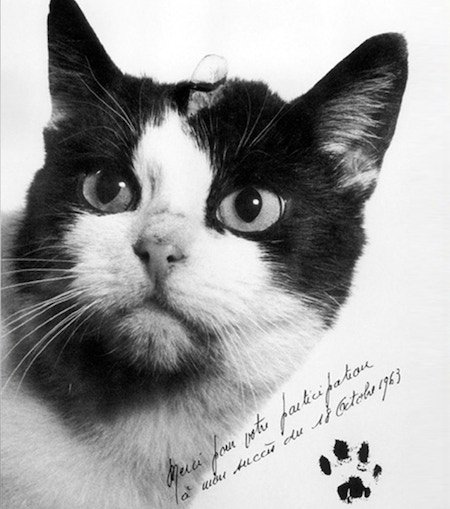 test Twitter Media - RT @improbresearch: The campaign to honor the first cat in outer space - https://t.co/mGX0eIJy1E https://t.co/7v5eaoujTT