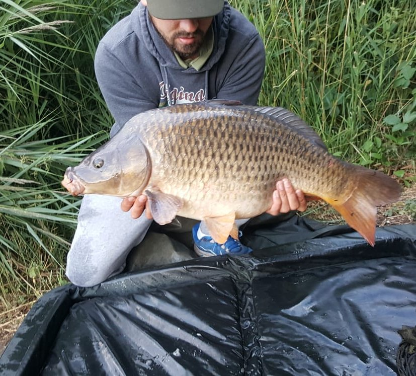 #<b>Commoncarp</b> #quickflick #carpfishing https://t.co/lIFo9TvdjV