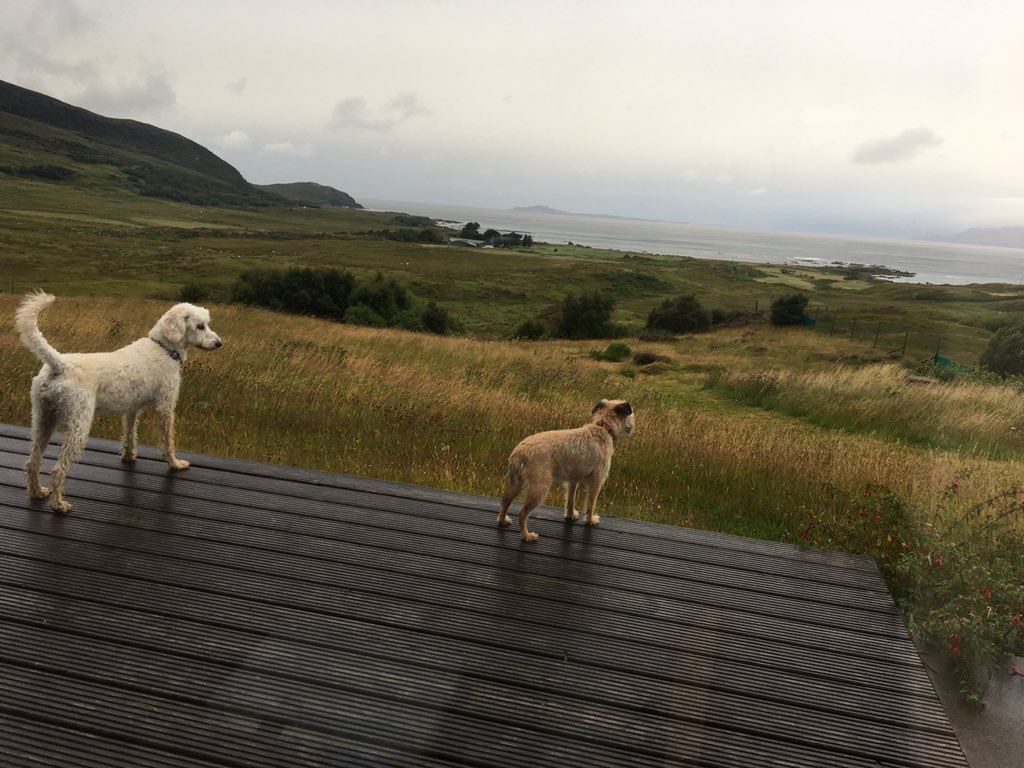 test Twitter Media - Daisy has a new favourite spot to watch the sheep in Brenault at Miss Parkes cousins. Bit rainy today https://t.co/h9e24GRelZ