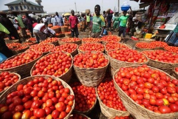 test Twitter Media - Ba Issa TRAORE un maraicher au #Mali « La culture de la #tomate améliorée me permet de payer des vivres comme le #riz et le #mil pour faire vivre ma famille...». #agrobusiness #afrique #GouvGN #agriculture https://t.co/rOhhIwBUej