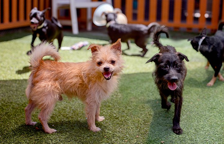 test Twitter Media - They're scruffy and sweet and small and have the best names—see how 37 dogs rescued from a hoarding situation in #LosAngeles are now finding their forever homes after receiving collaborative help from the community, shelters and rescues: https://t.co/GOcxJbcWOn. #SaveThemAll ^ND https://t.co/KBZOepnkl8