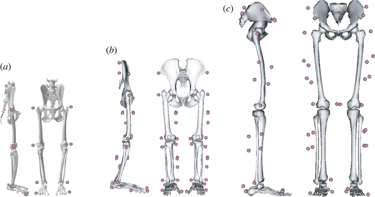 test Twitter Media - Learn about three-dimensional kinematics and the origin of the hominin walking stride from a new #Interface paper by O'Neill et al. https://t.co/bTmcXjP80J https://t.co/bcmweQiS5P