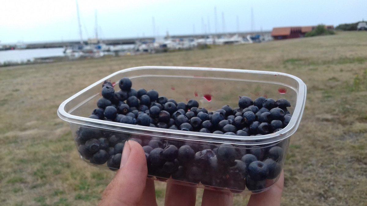 Les fruits locaux de saison en Suède c'est pas évident évident...Aujourd'hui on teste les myrtilles !