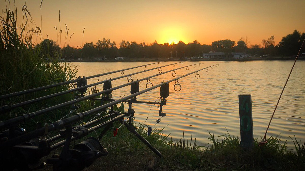 Beautiful. #carp #CarpFishing #fox_international #<b>Shimano</b> #sun #love https://t.co/CkbblaZ81w