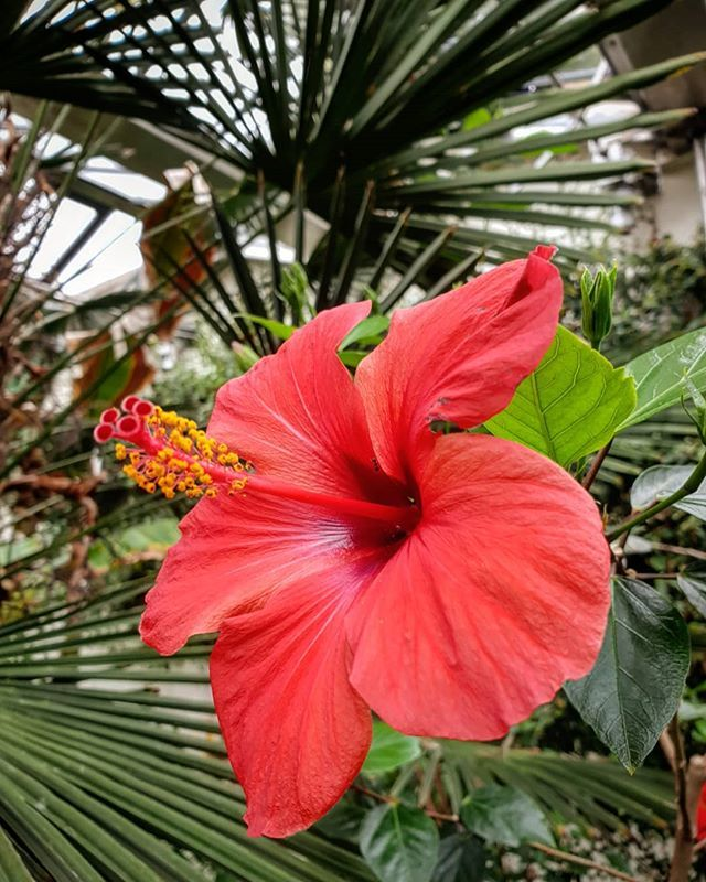 RT @CwizzyWoo: 🌺 #sheffieldbotanicalgardens #tropicalflowers #sheffield #palmsunday https://t.co/LrXumKzR8j https://t.co/68ugykSDuV
