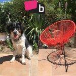 Meanwhile, the new dog is settling in nicely. 😩 #NoBaxterNO 🐕😡  https://t.co/Tkghe8J2cM https://t.co/RJXz1x2rWZ
