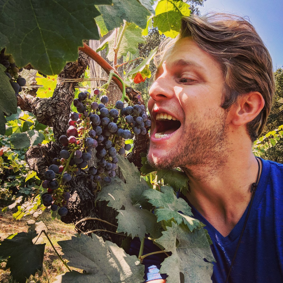 RT @ChaseRColeman: In #napavalley and I can't help myself... YUMMY!   #rockon #grapes #wine #manicmonday https://t.co/tTLtqtJ3KF