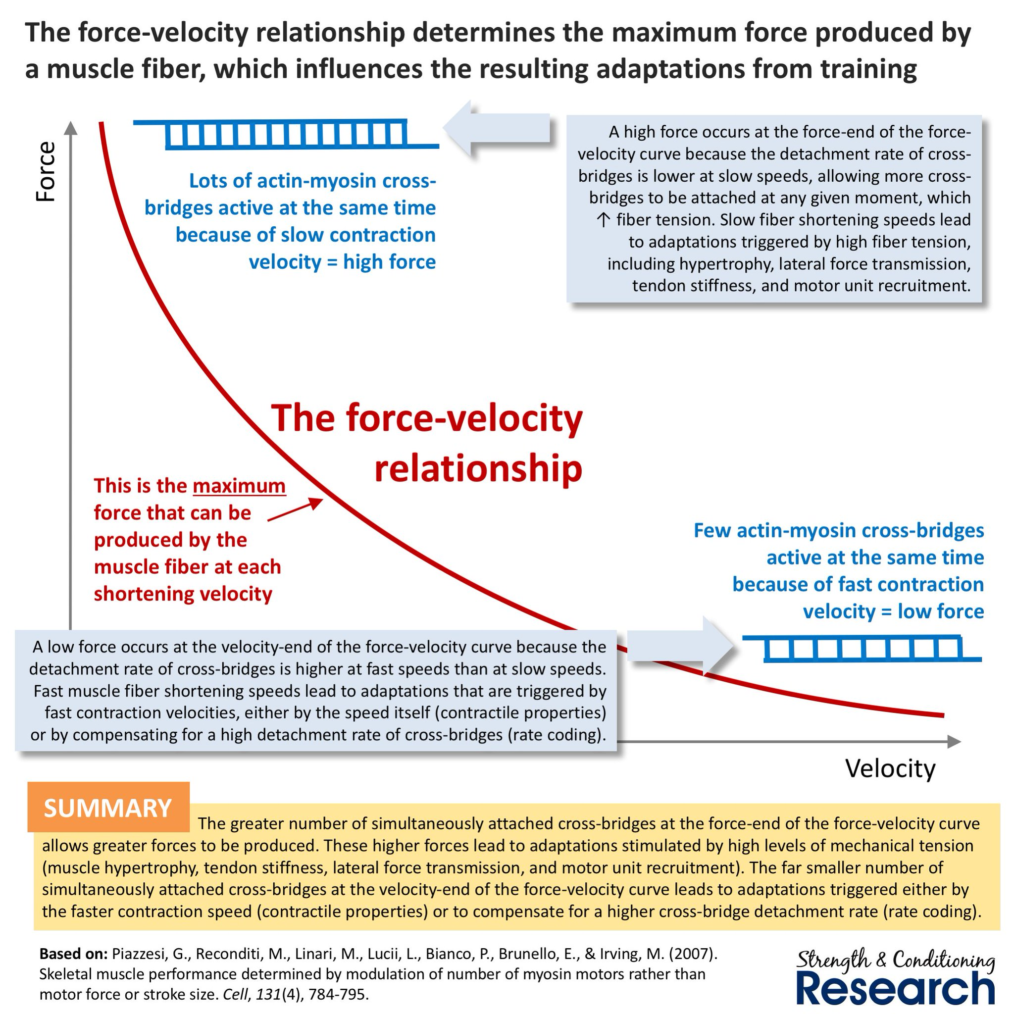 Do you want to stimulate tension-related adaptations that enhance maximum strength, or velocity-related adaptations that improve high-velocity strength? https://t.co/rWwPrxrM30