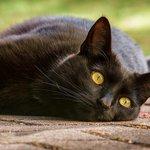 180818黒猫かわいい