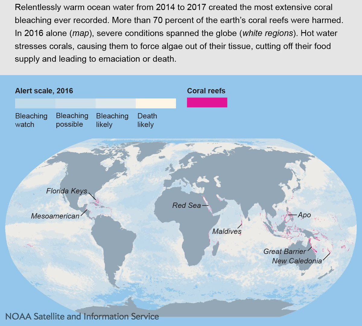 test Twitter Media - We're celebrating #Datapalooza with @NOAASatellite. This infographic shows the worst coral bleaching on record. Read the full story here: https://t.co/wFSGHyTxLp https://t.co/Ukk71q3FSm