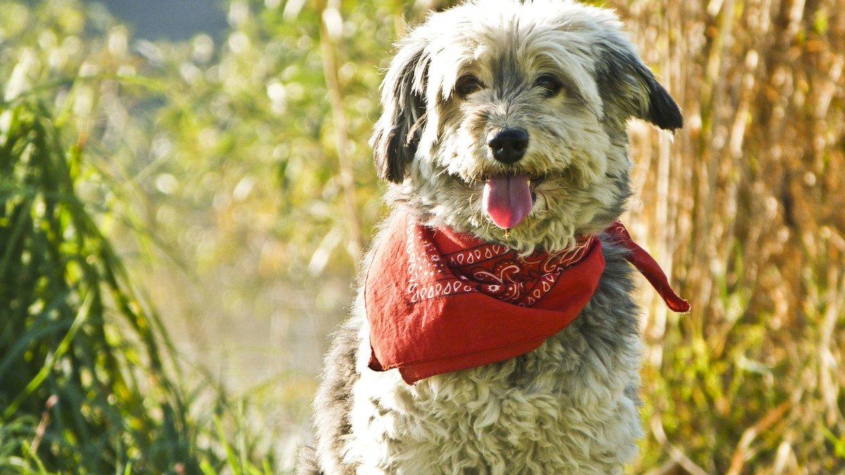 test Twitter Media - What a cute dog! #dogfriends https://t.co/aowE2Erc1B