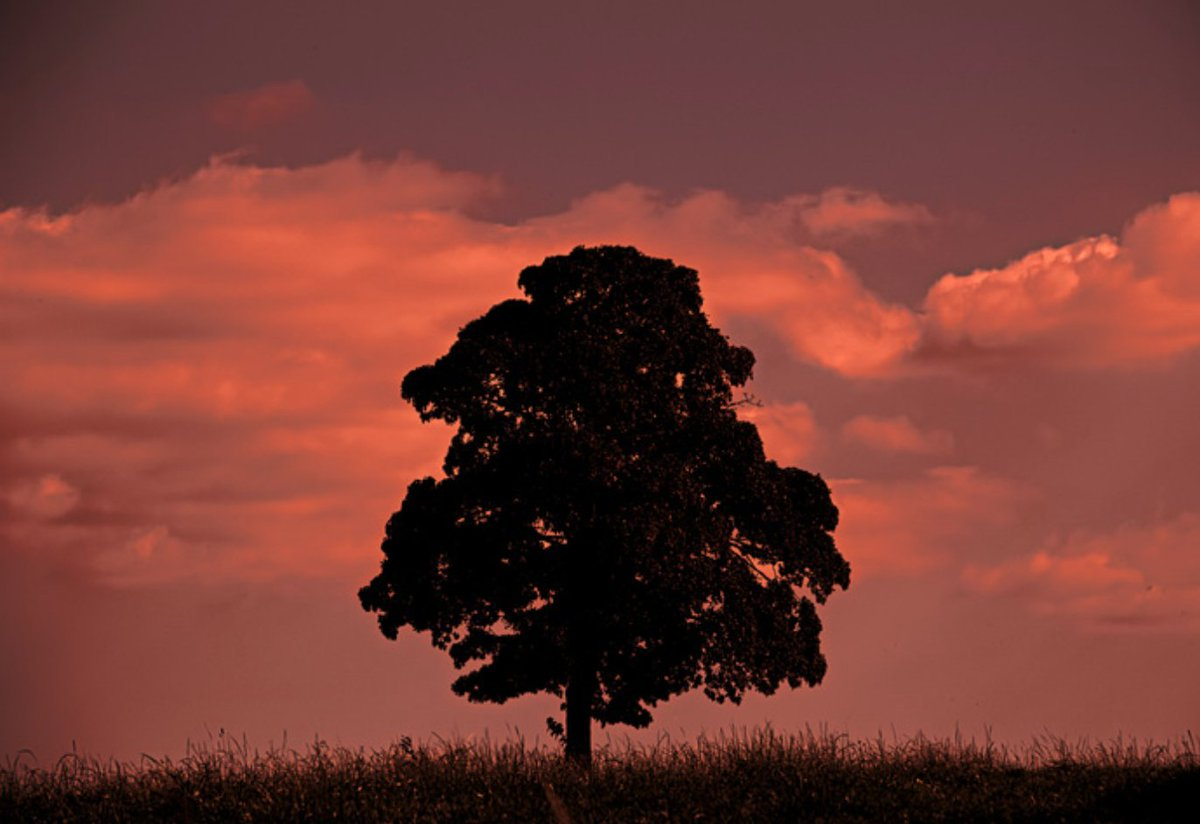 Post an interesting photo of a tree here: https://t.co/DT9D6KzJ2m ???????????? https://t.co/qYSJGmtc0N