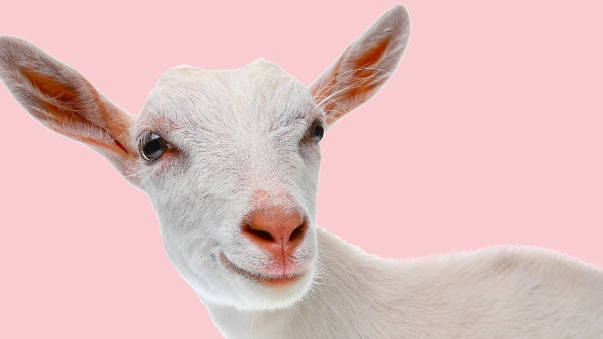 test Twitter Media - This story of two runaway goats has a happy ending https://t.co/B7XIMVSn8z https://t.co/5xUoEvzCA5