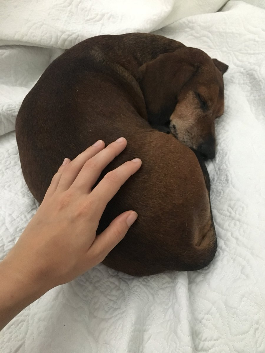 One happy pup ❤️ ot1TXrLy99