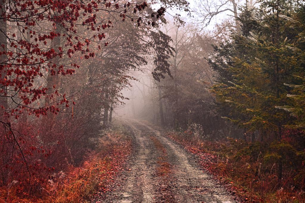 Woods walk  https://t.co/lXaJKaeDxa https://t.co/COOvoscr90
