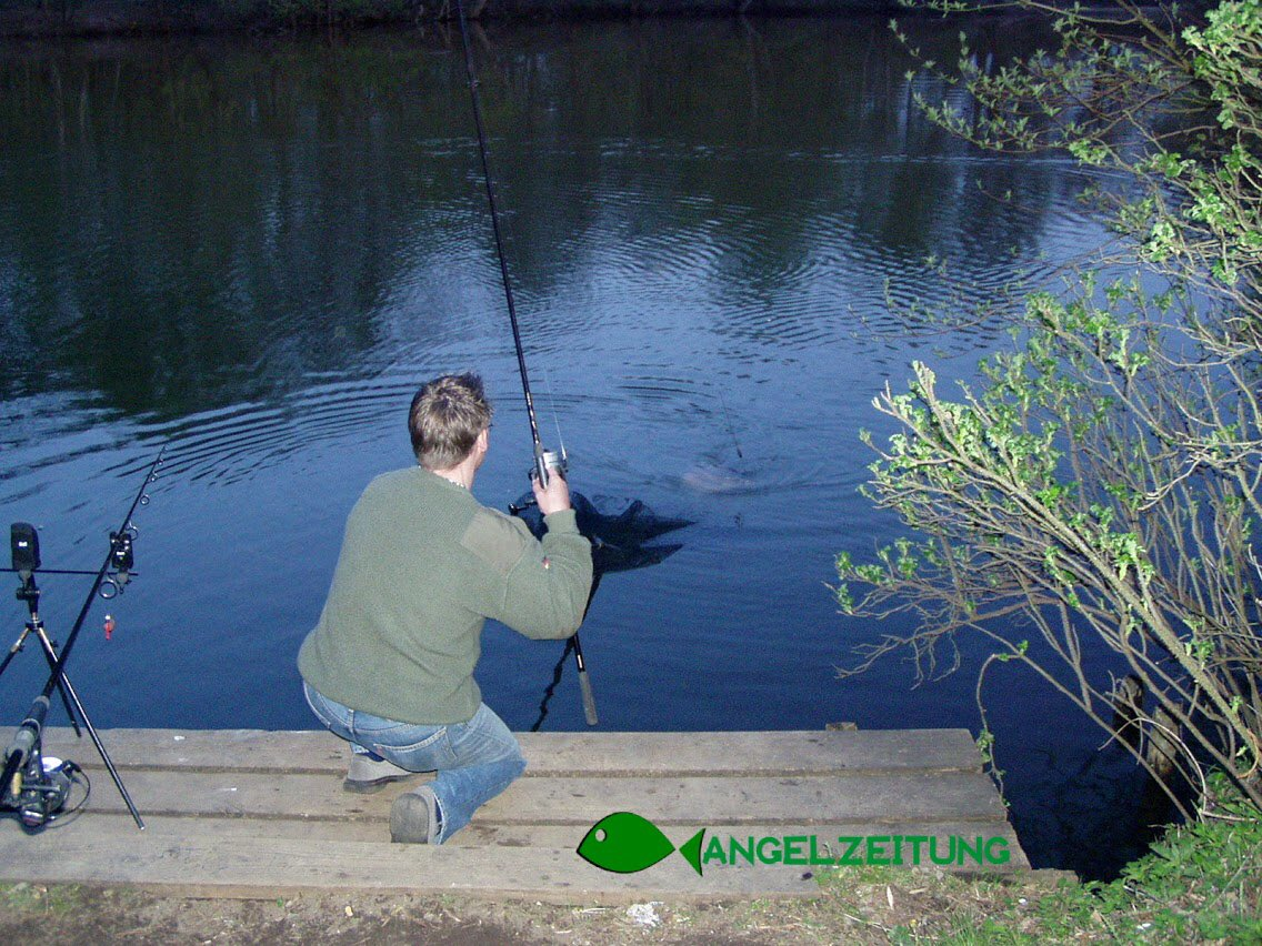 Nice #carp from a local lake 😃 #fishing #carpfishing #Angeln #karpfenangeln #fishin #<b>Fishingli