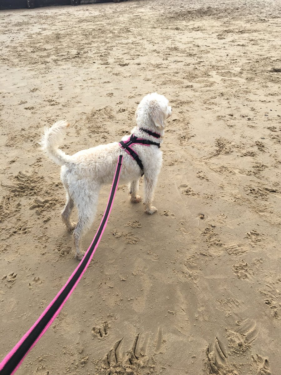 test Twitter Media - Another beach for Daisy @willowsvets @Myhappydoguk @canin https://t.co/lNrZzjzA3R