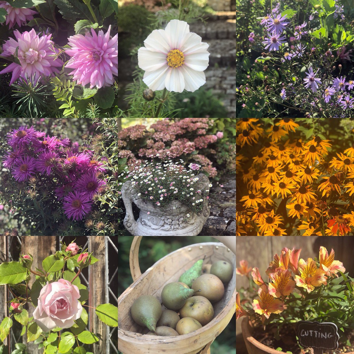 September in my Garden is so Colourful ???????????? How is yours looking send me pics ???? https://t.co/sa1AinwDTN