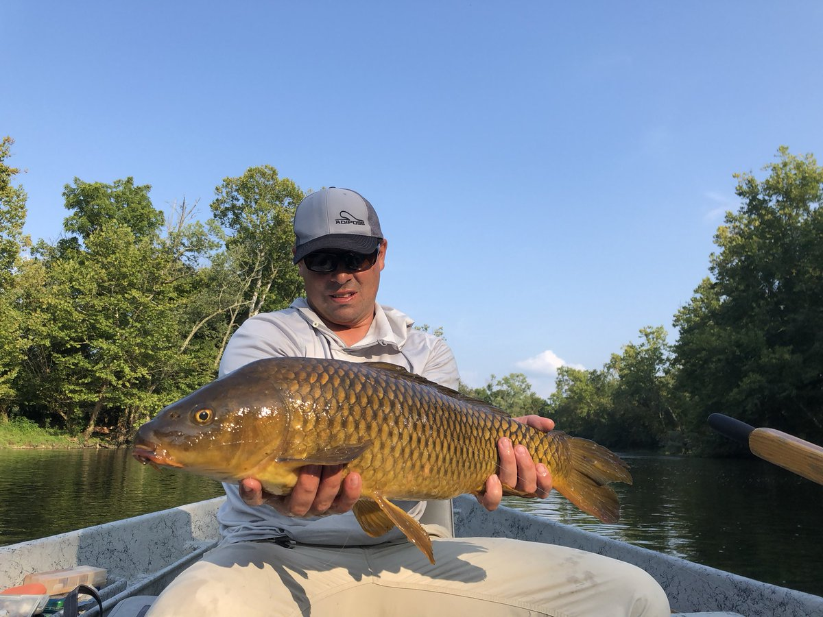 Carp on fly all late summer. Dead drifts with trout bugs... #flyfishing #carpfishing #etn #guideserv
