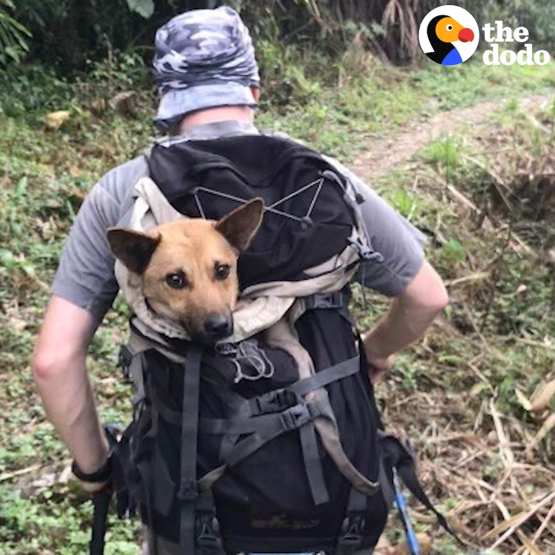 RT @dodo: These guys started hiking at 3 a.m. to save a dog trapped hours away in a remote mountain village ???? https://t.co/hpXFhQRTmI