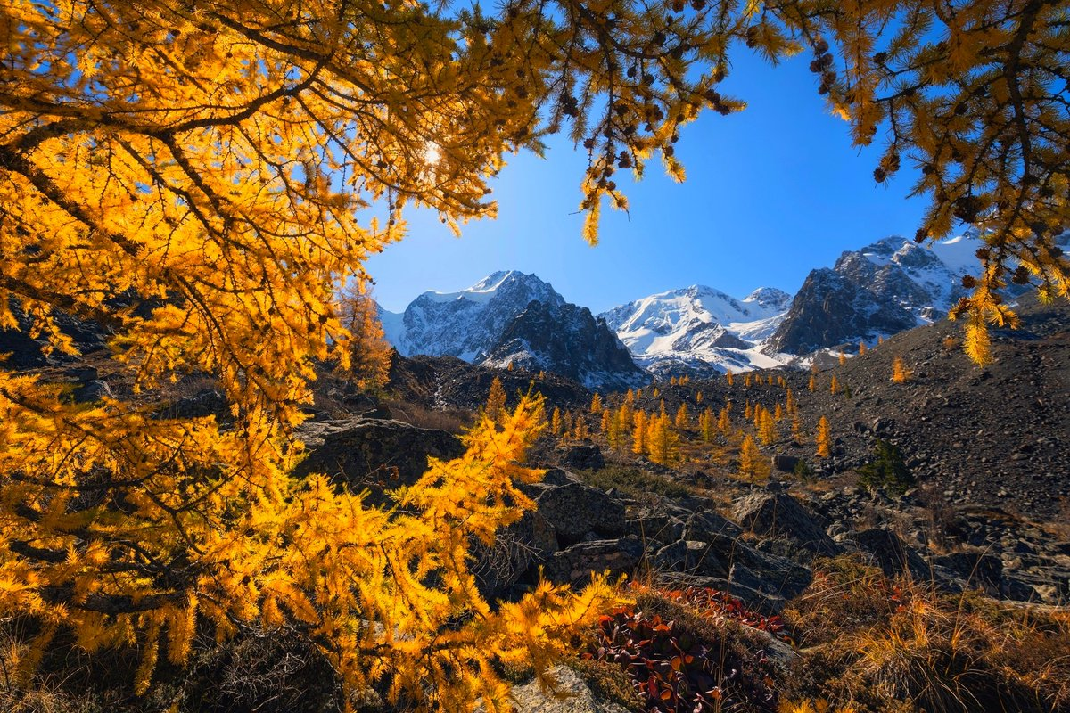 test Twitter Media - RT @iv_boks: Good morning my friends. 🌤🌿😉☕️ Photo by Din Zargo #landscapesRussia #mountains #larch #Altai https://t.co/b2wxluijmr