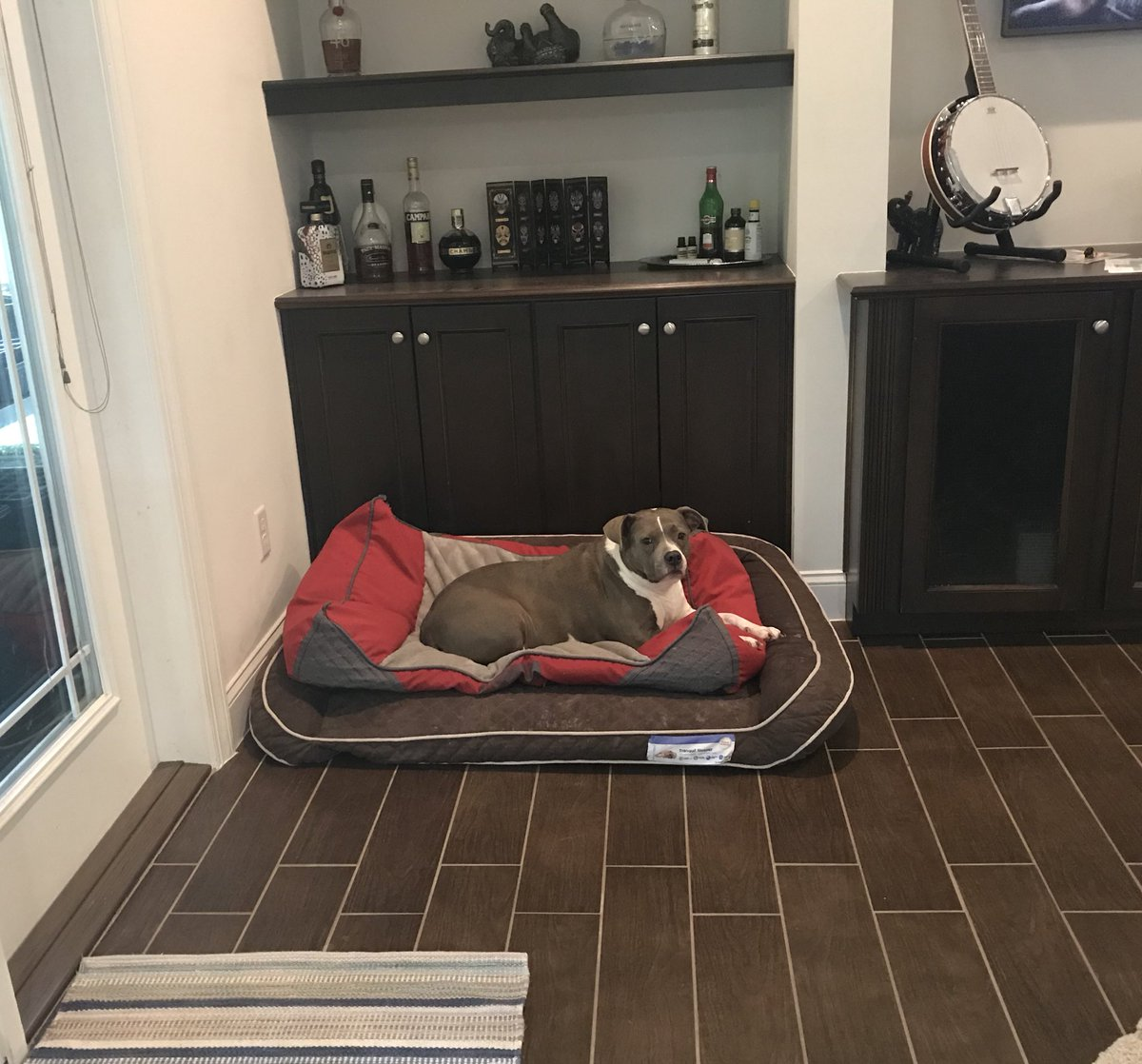 I was cleaning the floors so I stacked the dog beds and Bella decided it was now the PERFECT bed for