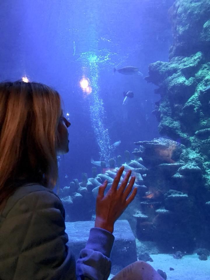 1 pic. aquarium uk🇬🇧😇😍 CKHl0hEUPk