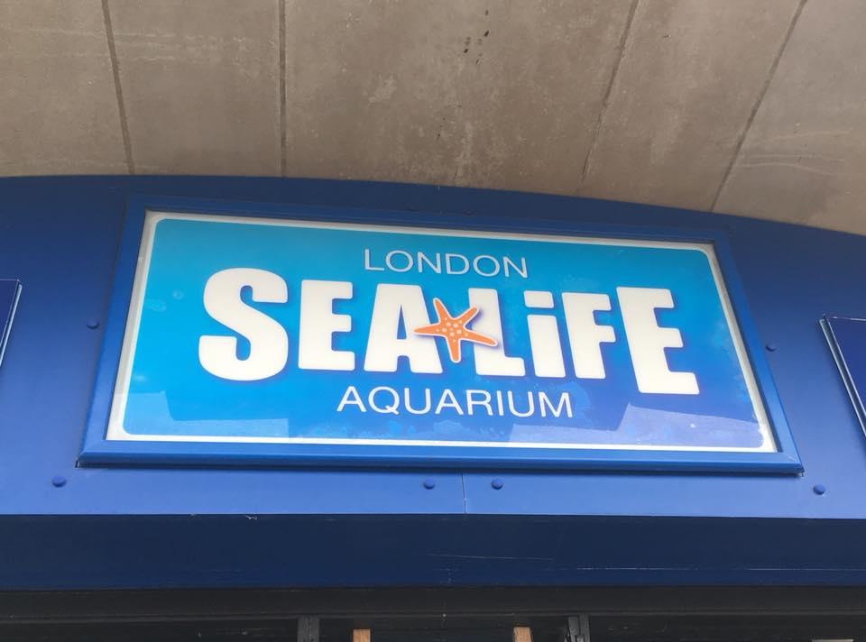 3 pic. aquarium uk🇬🇧😇😍 CKHl0hEUPk
