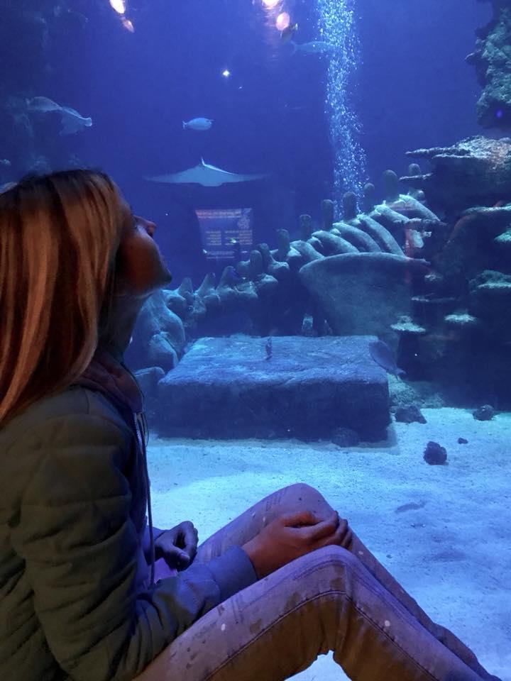 2 pic. aquarium uk🇬🇧😇😍 CKHl0hEUPk