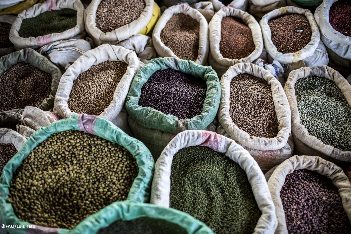 RT @FAO: What we eat starts with the seeds we plant and the #foodsystems we have in place. #ZeroHunger https://t.co/WDpxxY79Wn