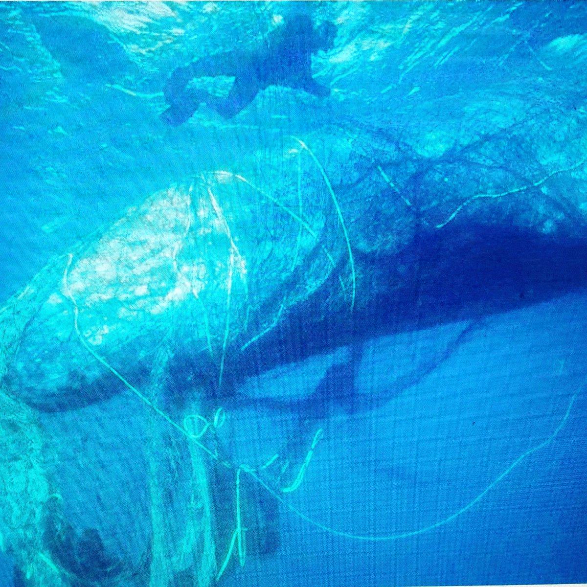 Check out Hayden'https://t.co/PHwdpGxUTu #oceansmatter #haydenpanettiere https://t.co/ERRqTza1tn