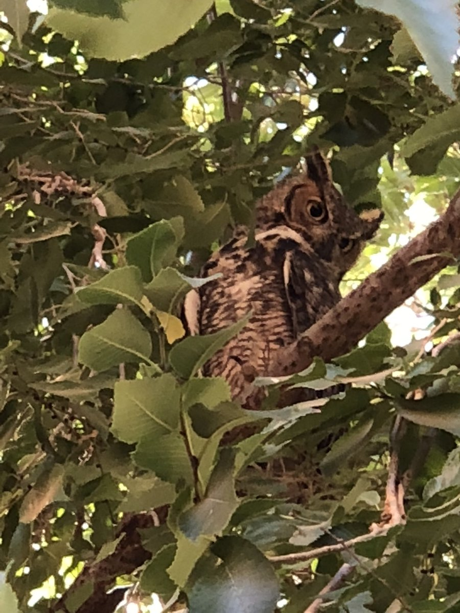 While visiting the @FarmSanctuary, I saw this owl in a tree. Nature, man... https://t.co/UPHu3VWaPx