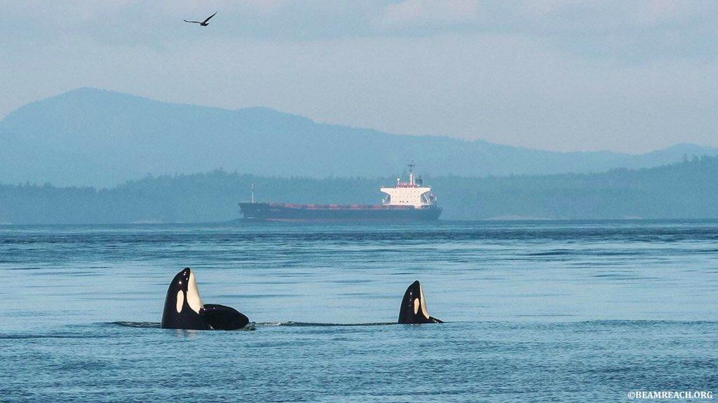 TWITTER ON A BESOIN DE TOI ! Pour sauver les orques ici, à San Juan. Il faut signer cette pétition pour interdire la construction d'un pipeline (conduit de pétrole dans l'océan). TU VEUX AGIR ? C'est maintenant 👋🏼 :  et tag : @JustinTrudeau
