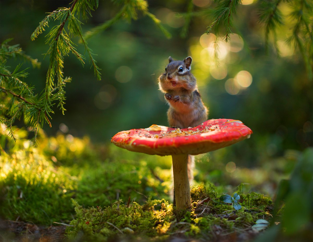 test Twitter Media - RT @iv_boks: Good evening to all of you my friends.  😉🍀🐿️ Photo by Evgenia Levina #HappyNewWeek https://t.co/zX09ggUSxj